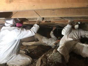 Mold-Damage-Restoration
